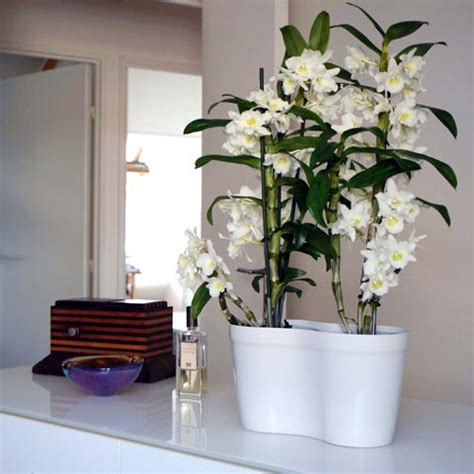 soigner les orchidees en pot poetic jardin