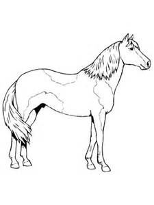 paso fino horse coloring page  printable coloring pages