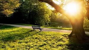 下载壁纸 1366x768 夏季早晨公园长椅,树木,草,阳光 桌面背景