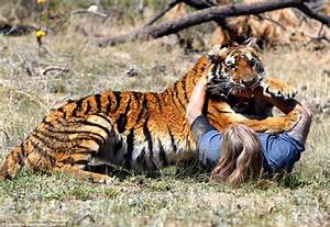 Woman having sex with tigers
