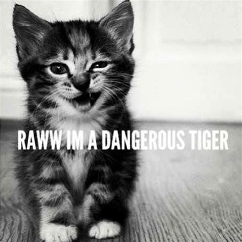 rawr im  dangerous tiger wolves   animals
