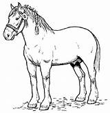 Horse Pages Coloring Paint Realistic Template Horses Printable Print Sheets Pony Adults Printables Real sketch template