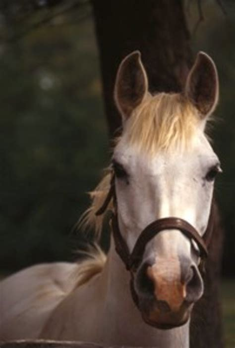 tongue injuries  horse owners resource