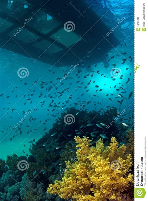 coral reef glass bottom boat stock image image