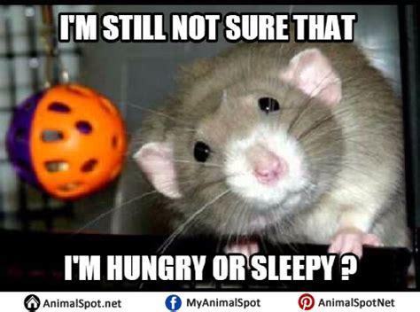 Mouse Memes - mouse memes