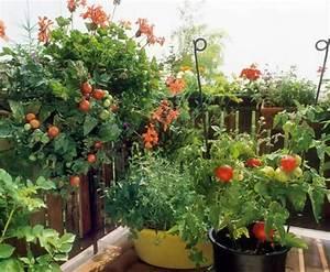 gemse pflanzen auf dem balkon innenraume und mobel ideen With markise balkon mit obst tapete