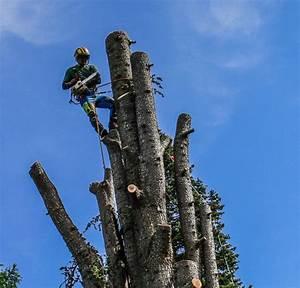 Was Kostet Baum Fällen : baumf llung risikof llung und baumpflege zu allen jahreszeiten baterovskyy viersen ~ Orissabook.com Haus und Dekorationen