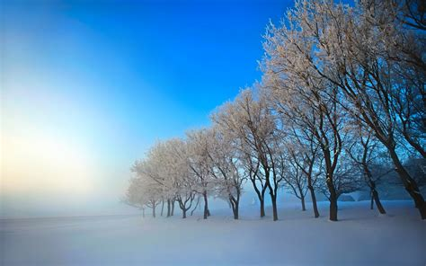 winter, Nature, Snow, Beautiful, Lovely, Landscape ...
