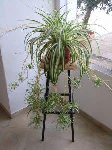 Pflanzen Im Kinderzimmer by Pflanzen Im Kinderzimmer Ja Klar Waschb 228 R Magazin