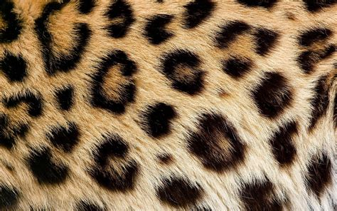 Animal Skin Wallpaper - 1 leopard skin hd wallpapers backgrounds wallpaper abyss