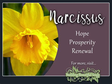narcissus meaning symbolism flower meanings