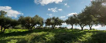 Greek Extra Virgin Olive Oils Capture 134 Awards in London, including 29 percent more Gold awards than the previous year…
