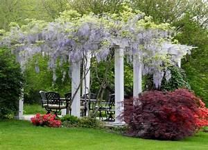 Welche Pflanzen Vertragen Sich Tabelle : blauregen ber die terrasse stilvolle pergola garten ~ Lizthompson.info Haus und Dekorationen