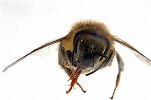 Bee Microphotography