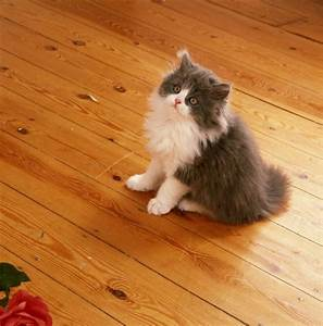 cleaning cat urine smell on hardwood floors thriftyfun With urine chat parquet