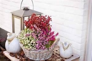 Plantes D Hiver Extérieur Balcon : collection balcon d 39 hiver 4 plantes serres et jardin ~ Nature-et-papiers.com Idées de Décoration