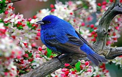 Bird Birds Wallpapers Screensavers Bluebirds Wings Computer