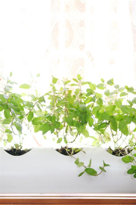 make a floating pvc window planter a beautiful mess