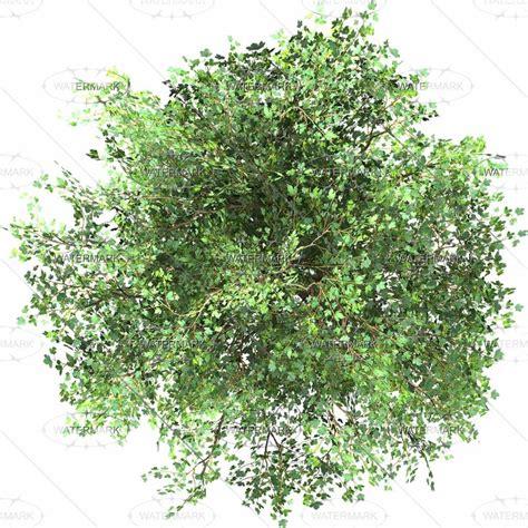 photoshop tree images  pinterest