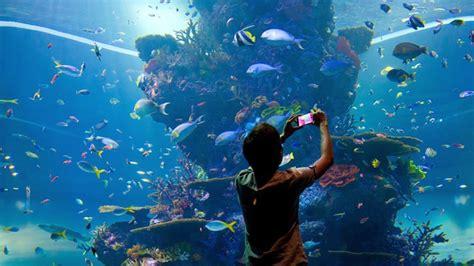 sea aquarium s e a aquarium yoursingapore