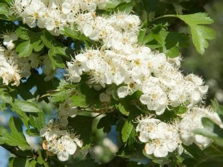 17+ Best Images About Trees Michigan Zone5 On Pinterest