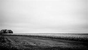 The gallery for --> Farm Field Black And White