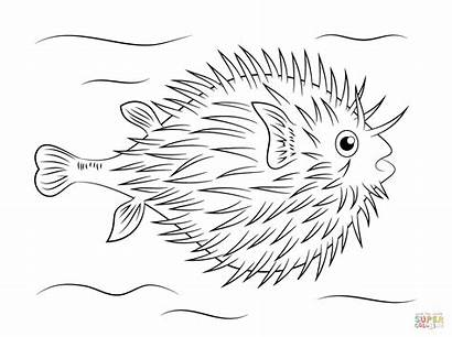 Fish Coloring Puffer Pages Pufferfish Printable Sketch