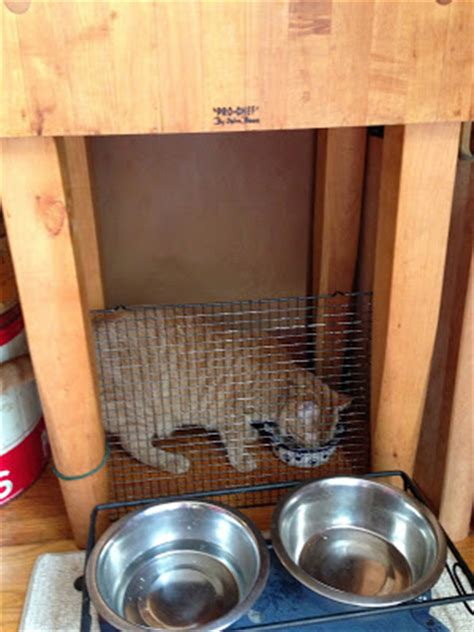 proof cat feeder tales from a sears house proof cat feeding station