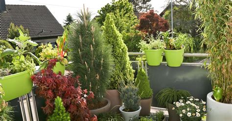 Winter Balkonpflanzen by Balkonpflanzen Sonnig Winterhart Winterharte