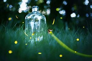 Why are fireflies disappearing? | MNN - Mother Nature Network
