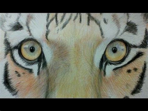 draw  tigers eyes watercolor pencils youtube