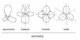 Floral symmetry | Shapes in nature/science | Pinterest | Labs
