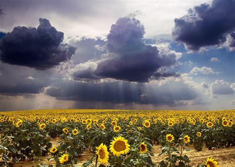 el campo argentino taringa
