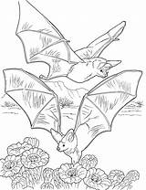 Coloring Bats Pages Bat Nectar Gathering Printable Colouring Cave Halloween Supercoloring Print Sheets Adult Pixels Butterfly Books Tcma 2147 2800 sketch template
