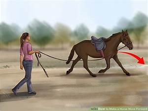 3 Ways to Make a Horse Move Forward - wikiHow
