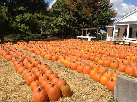 Priddy Farms Pumpkin Patch Memphis Tn by Download Pumpkin Patch In Brentwood Tn Finalrutor