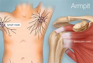 The Armpit (Human Anatomy): Picture, Function, Parts ...