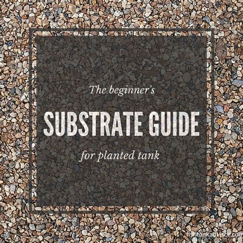 Best Substrate For Aquascaping by 4 Best Substrate Types For The Planted Aquarium Fish