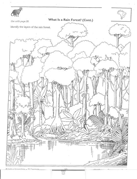 rainforest worksheets worksheets for all