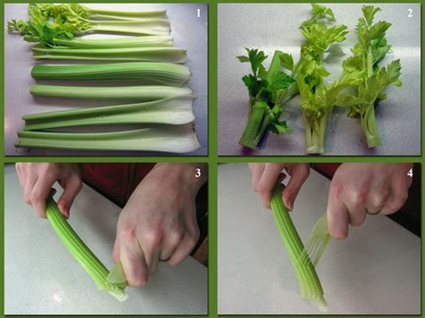 cuisiner celeri comment cuisiner le celeri branche 28 images gratinons