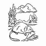 Coloring Beaver Dam Getdrawings Printable Pages Getcolorings sketch template