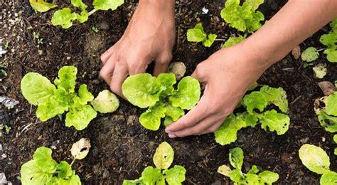 การเตรียมดินเพื่อปลูกพืช - Farmer Mee ฟาร์มเมอร์มี