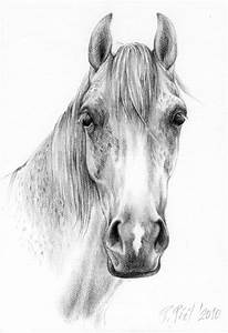 Horse Head Drawings In Pencil | Drawing and Coloring for ...