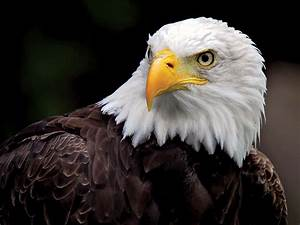 endangered species act definition provisions