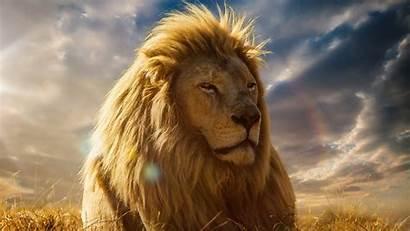 Lion King 4k Desktop Wallpapers