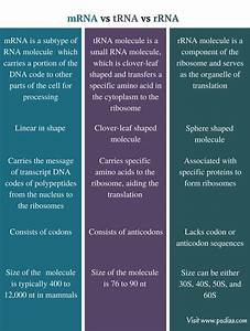 Difference Between Mrna Trna And Rrna