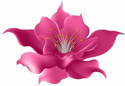 Transparent Flower Clip Pink Clipart Flowers Magnolia