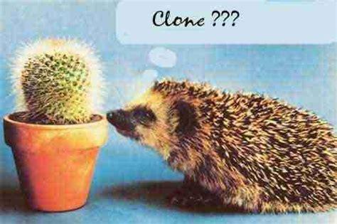 travail en bureau humours images drôles animaux