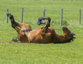 darmsanierung beim pferd mit pre und probiotika