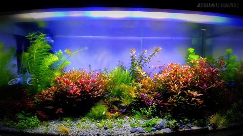 Aquascape Lighting by Lighting Style Aquascape